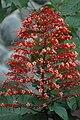 2014 Borneo Luyten-De-Hauwere-Flower-18.jpg