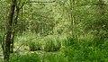 2015.05.14.-14-Lampertheim-Sued beim Hollaendergraben--Sumpfwald.jpg