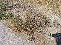 2015.08.22 12.00.26 DSCN2882 - Flickr - andrey zharkikh.jpg