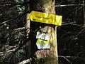 2017-07-23 (48) Dürreck and Fingerpost to Steinbachtal at Dürrenstein (Ybbstaler Alpen).jpg
