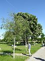 2017 Zentralfriedhof, Vienna 14.jpg