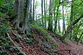 2019-09-28 Hike Stinderbachtal. Reader-24.jpg