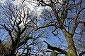 25.3.16 Delamere Forest 01 (26034034545).jpg