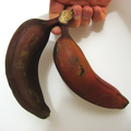 2 red bananas.png