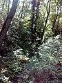 35-211-5004 Казавчинські скелі Лютинська 178.jpg