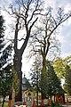 46-258-5024 Staryi Yar Oaks RB 18.jpg