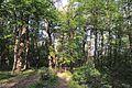 71-212-5062 Hupalivschyna DSC 5156.jpg