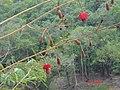 AMAZON RAINFOREST FLOWER - panoramio.jpg