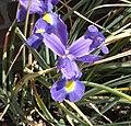 A Blume 44 019 be wp3.jpg