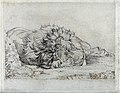 A dead or sleeping lion. Etching by J F Lewis, ca 1824, afte Wellcome V0021513.jpg