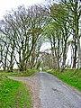 A fine avenue of trees near Lochans - geograph.org.uk - 165292.jpg