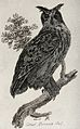 A great horned owl sitting on a branch of a tree. Etching by Wellcome V0021205.jpg