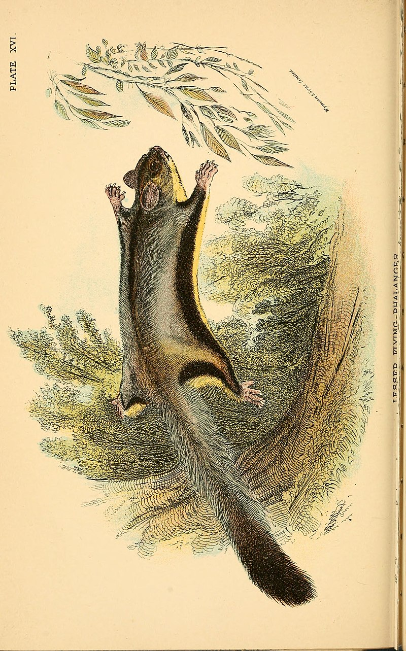 File:A hand-book to the marsupialia and monotremata (1896) (14592071317).jpg