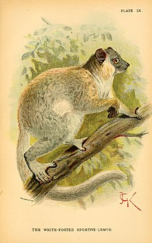 A hand-book to the primates (Plate IX) (6029123582).jpg