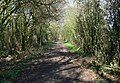 A leafy footpath near Thurcaston, Leicester. - geograph.org.uk - 389573.jpg