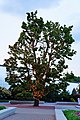 A luminous tree - panoramio.jpg