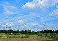A paddy field 03 09 2009.JPG