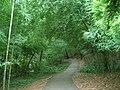 A path through bamboos - panoramio.jpg