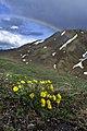 A rainbow arcing over high alpine tundra in Denali (cfe02062-d4da-48f5-87d2-ead7de059518).jpg