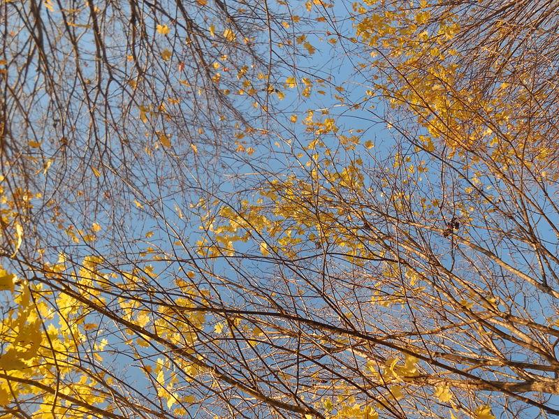 A spring tree.JPG