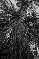 A tree!.jpg