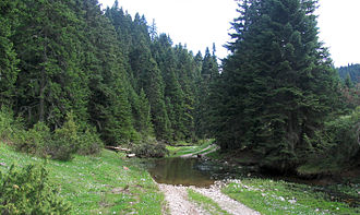 Taygetus - Abies cephalonica, Thessaly