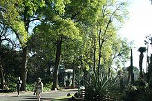 Jard n bot nico del instituto de biolog a unam Jardin botanico de la unam
