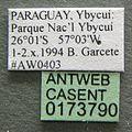 Acromyrmex balzani casent0173790 label 1.jpg