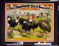 Adam Forepaugh & Sells Brothers great shows consolidated A congress of the giant birds of the world, ... LCCN94507621.tif