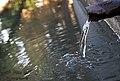 Agua limpia, agua sana, líquido transparete y nutritivo que gorgotea de forma ruidosa aunque muy atractiva a su vez - panoramio.jpg
