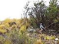 Aguila - panoramio (1).jpg