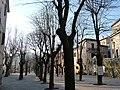 Alberi di piazza Regina - panoramio.jpg