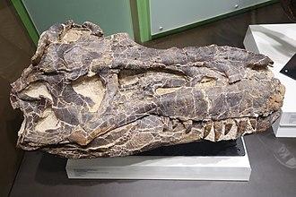Albertosaurus - Skull TMP 1985 098 0001