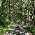 Allt yr Hafod-fawr - geograph.org.uk - 481372.jpg