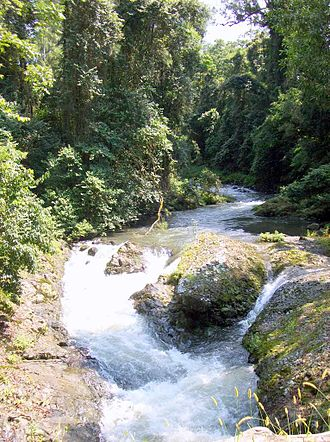 Allyn River - Allyn River, surrounded by sub tropical rainforest
