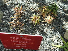 Botany Plantnames  Sinhala Plant names උදභද නම