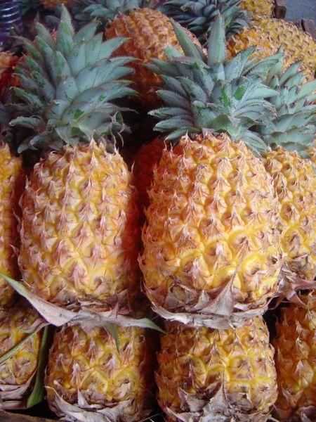 Fichier:Ananas comosus dsc07804.jpg