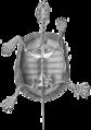 Anatometestudini01boja 0097-clipped.png