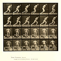 Animal locomotion. Plate 393 (Boston Public Library).jpg