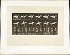 Animal locomotion. Plate 581 (Boston Public Library).jpg