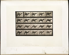 Animal locomotion. Plate 740 (Boston Public Library).jpg