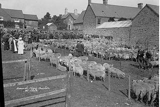 Annual sheep auction, Clun
