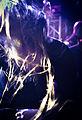 Antestor-BoE-2012-4.jpg
