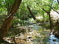 Apiesrivier-boloop, Groenkloof Natuurreservaat.jpg