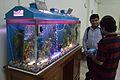 Aquarium - Restaurant - University Guest House - Jadavpur University - Kolkata 2014-11-21 0746.JPG