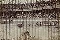Arènes de Roubaix - Collection Jules Beau - F50 - Année 1899 (gauche).jpg