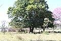 Araguainha - State of Mato Grosso, Brazil - panoramio (1101).jpg
