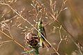 Araignées, insectes et fleurs de la forêt de Moulière (Les Agobis) (28942853861).jpg