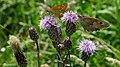 Artenvielfalt im LSG Oldhorster Moor 13.jpg