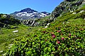 Auf dem Grossen Sankt Bernhard Pass.jpg